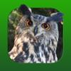 Heintges Jagdtrainer - Swift Management AG