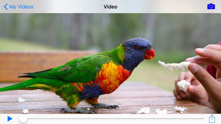 Video Camera+ screenshot-3