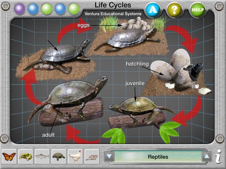 Interactive Life Cycles screenshot-3