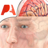 Pocket Brain - Neuroanatomía Interactiva