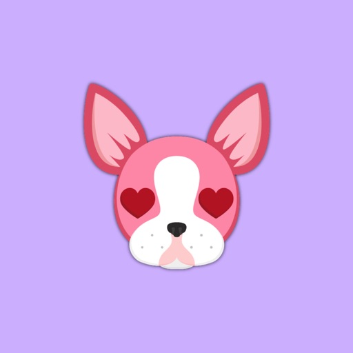 Valentine's Day Boston Terrier