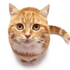猫声 - 适合猫爱好者