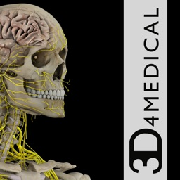 Brain & Nervous System Pro III