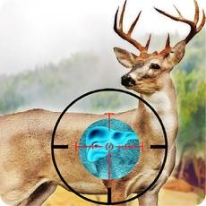 Activities of Wild Deer Hunting Deadly Shoot