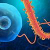 Ebola Tracker - Bryan Ratledge