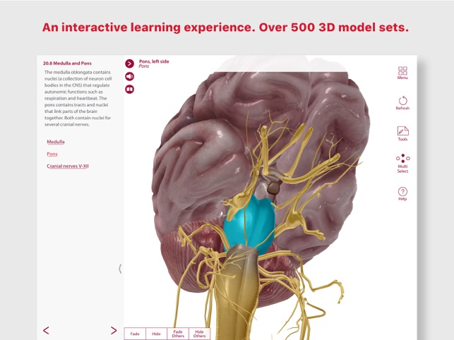 Anatomy Physiology On The App Store