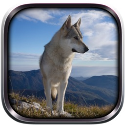 Wild Wolf Life Simulator
