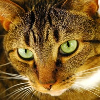 Codes for Cat Puzzles Hack