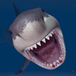 Megadelon Shark Night Scooba