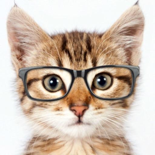 Catify - Cat Effects Camera
