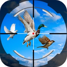 Activities of Shoot Fly Bird 3D