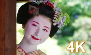 Maiko TV 4K