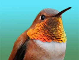50 Hummingbirds - 12 Animated Hummingbirds, 38 Hummingbird static Stickers for iMessage