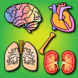 Los órganos del cuerpo para niños: Enseña a los niños en el hogar y en las aulas, alrededor de diecisiete diferentes órganos (cerebro, el páncreas, los riñones y muchos más)