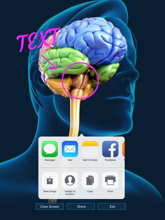 My Brain Anatomy App Price Drops