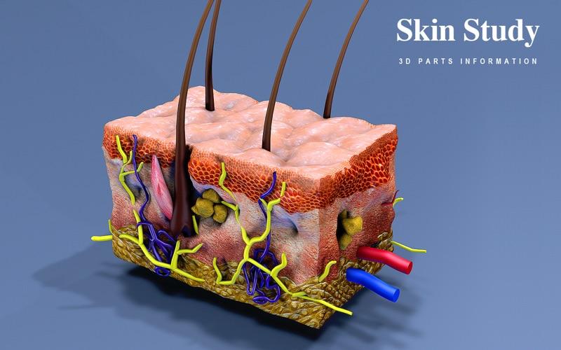 Skin Section 3D скриншот программы 1
