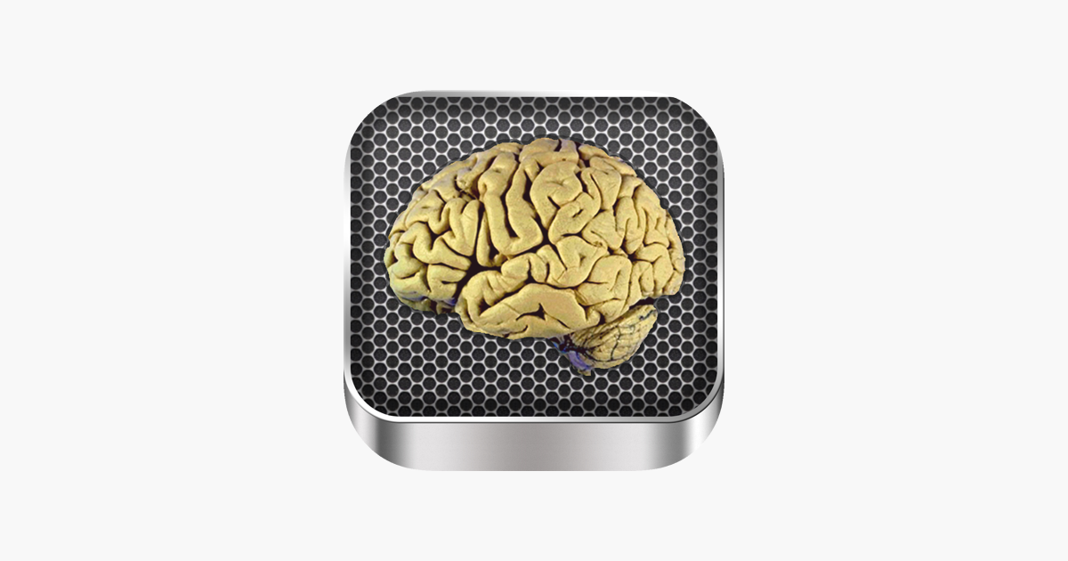 Brain Anatomy On The App Store