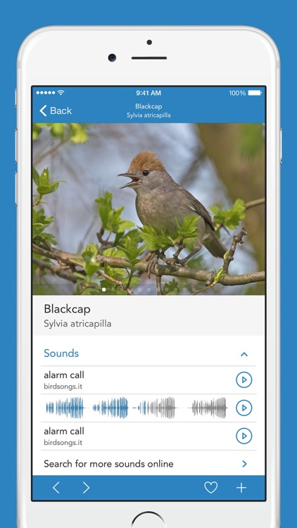 iKnow Birds 2 PRO - Europe screenshot-2