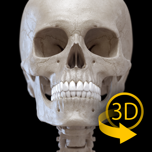 Скелет - 3D Атлас анатомии