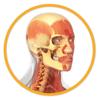 Miniatlas Anatomía
