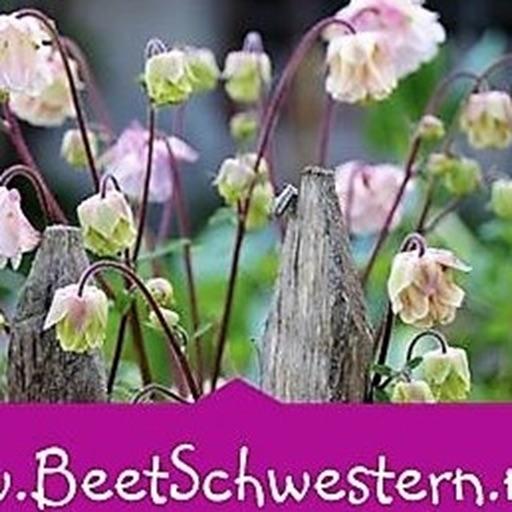 BeetSchwestern - Blog
