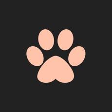 Activities of Cat Bento