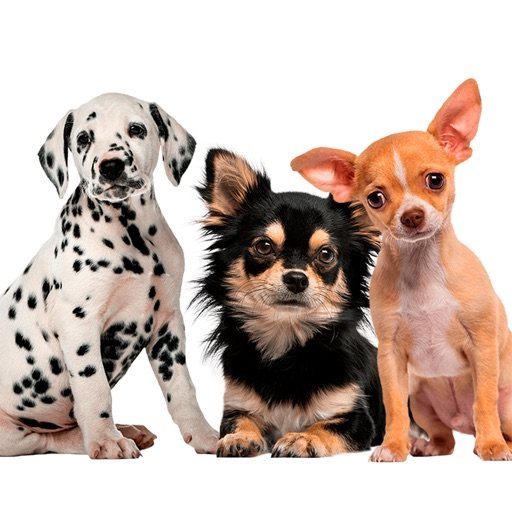 Chihuahua & Dalmatians & more