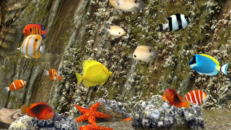 MyReef 3D Aquarium 3 screenshot-4