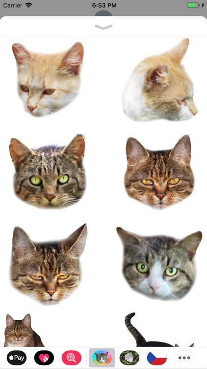 Cat Stickers Meow screenshot-5