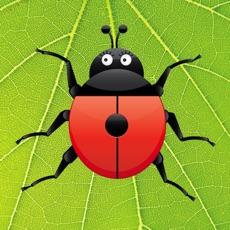 Activities of Ladybug Count