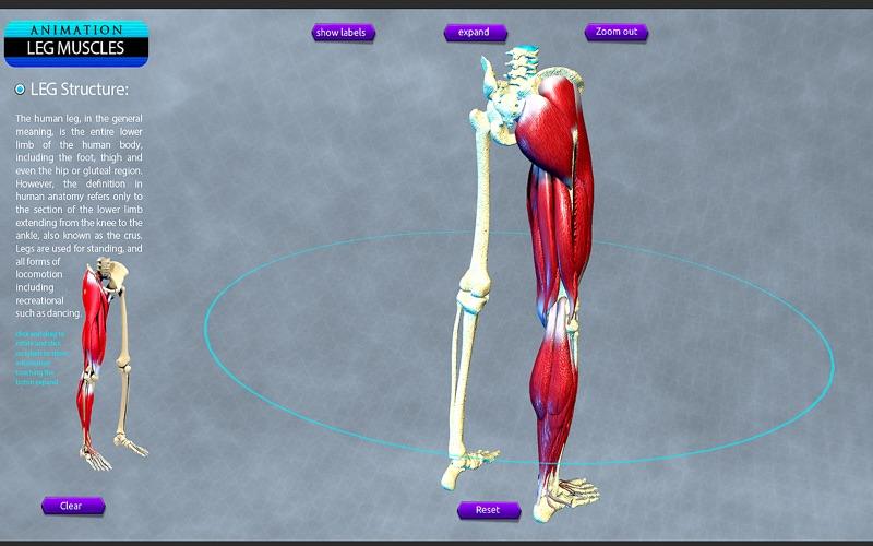Leg Muscles Motion скриншот программы 3
