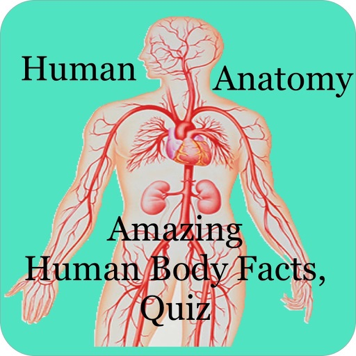 Amazing Human Body Facts, Quiz