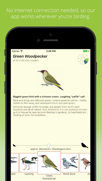 Birds by Colour screenshot four