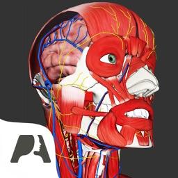 Pocket Anatomy Pro