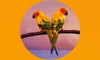 Parrots Wiki