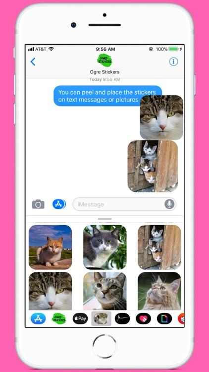 Cutest Cat Stickers