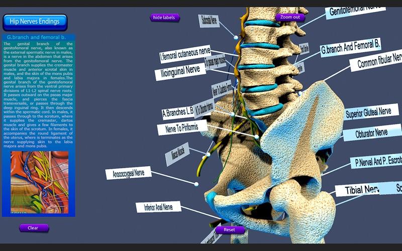 Hip Nerves Ending скриншот программы 4