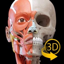 Muscle | Skeleton - 3D Anatomy
