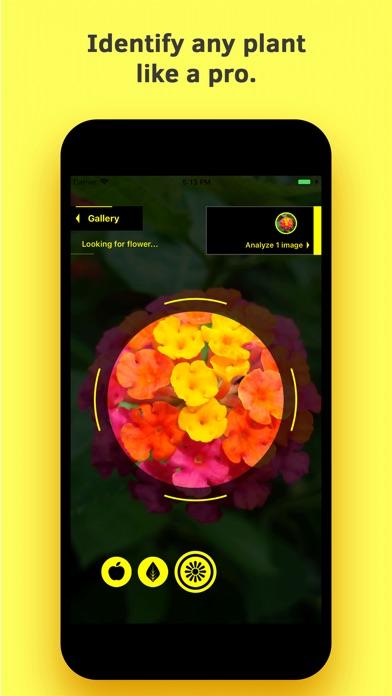 Plant Identification screenshot 1