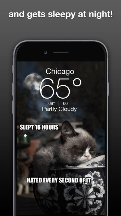 Grumpy Cat's Funny Weather Screenshot