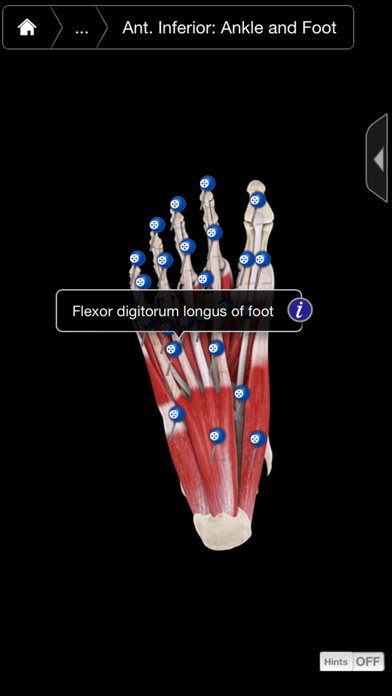 Muscle System Pro Iii review screenshots