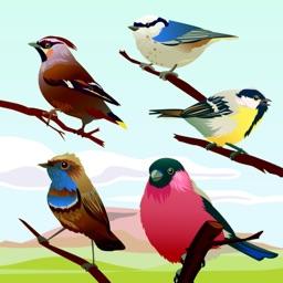 Bird Sounds!