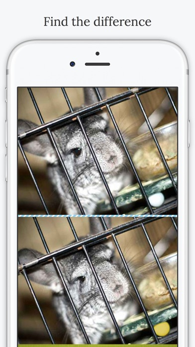 download Find the Difference in Chinchilla apps 0