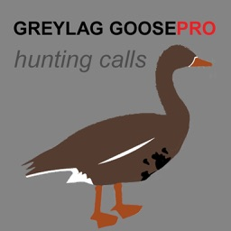 REAL Greylag Goose Hunting Calls - Greylag Goose CALLS & Greylag Goose Sounds! (ad free) BLUETOOTH COMPATIBLE