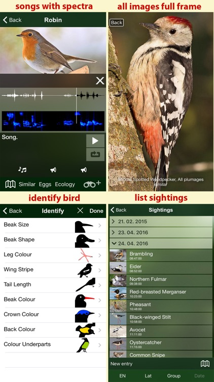 Birds of the Netherlands - a field guide to identify the bird species native to NL and Holland screenshot-4