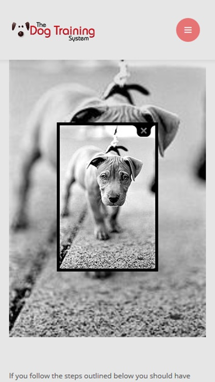 Dog Training for beginners screenshot-4