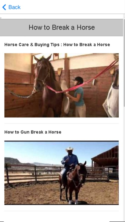 Horse Training - Learn How to Train a Horse
