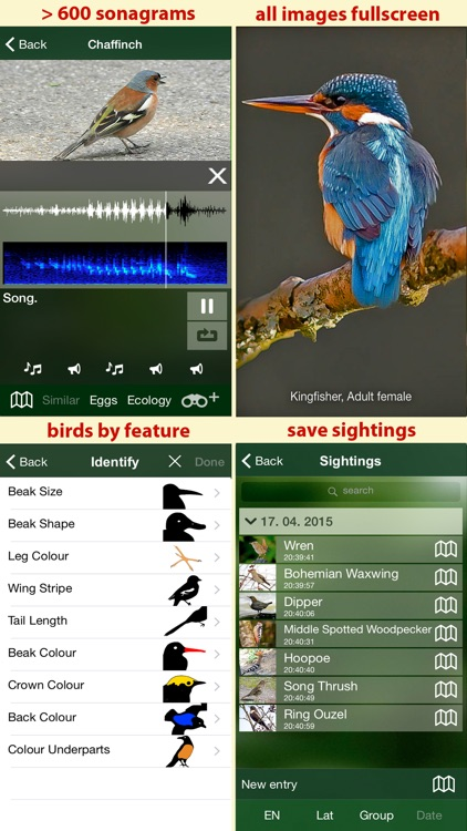 Birds of Germany - a field guide to identify the bird species native to Germany screenshot-4