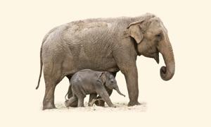 Animals Matching Pairs