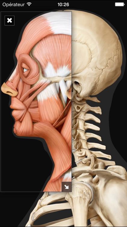 Виртуальное человеческое тело screenshot-3